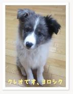 犬 クレオ